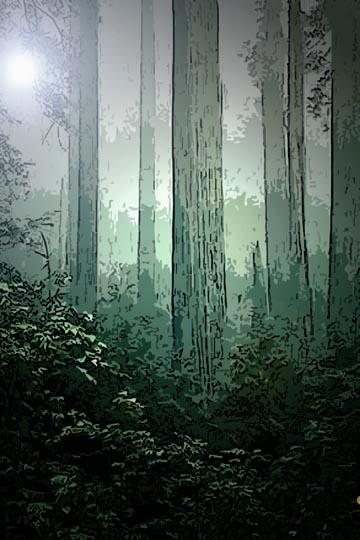 redwoodbkcvr1