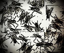 cluster-of-flies